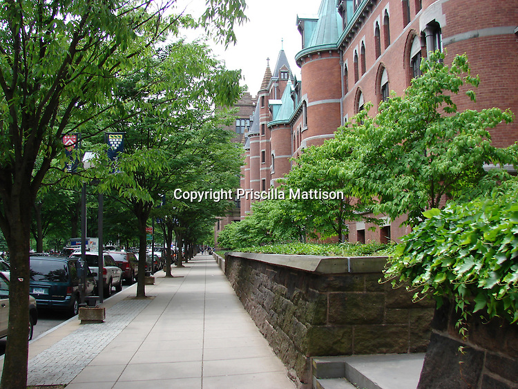 New Haven, Connecticut - June 3, 2007:  Trees line the sidewalk outside Yale's Old Campus.