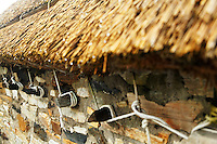 Detail of thatched roof (in rounded Donegal style) on cottage at Glencolmcille Folk Village Museum, Glencolmcille, County Donegal, Republic of Ireland