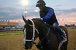 October 30, 2018 : Miss Sunset gets a pat at dawn at Churchill Downs on October 30, 2018  in Louisville, Kentucky in preparation for the Breeders' Cup Filly and Mare Sprint. Mary M. Meek/ESW/CSM