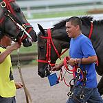 September 06, 2014:  Scenes from Gulfstream Park.  #8 Lei it On Me with jockey Victor Carrero on board, breaks her maiden in race 8, at Gulfstream Park in Hallandale Beach FL. Liz Lamont/ESW/CSM