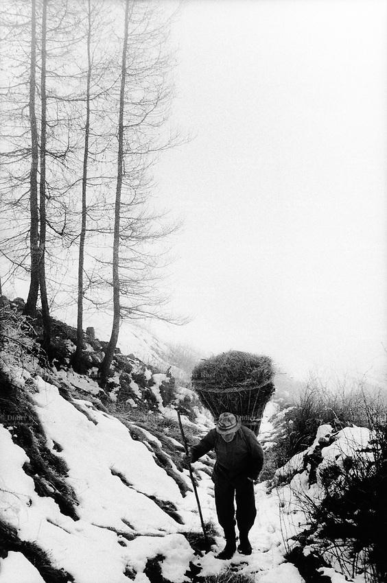 "Switzerland. Canton Graubünden. Viano. Poschiavo valley. Luigi Merlo carries hay on his back in a wood basket, called "" campache"". Winter season. Snow. Manual labor. Labour force.Swiss alpine farmers. Alps mountains peasants.  © 1995 Didier Ruef"
