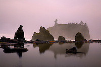 SEA STACKS,FALLEN TIMBER AND TREES ARE REFLECTED IN THE SURF AT DEWEY BEACH ON THE OLYMPIC PENINSULA IN WASHINGTON STATE