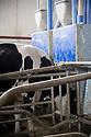 15/02/17 - OLLOIX - PUY DE DOME - FRANCE - GAEC de Savignat. La stabulation et ses logettes - Photo Jerome CHABANNE