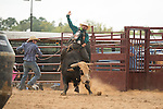 SEBRA - Windsor, VA - 9.20.2015 - Bulls & Extras