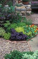 Beautiful herb garden, edible flowers Nasturtiums Tropaoleum Alaska, stone wall, purple basil, thymes, mixture of different herbs in charming setting, stone pebble pathway edged in bricks