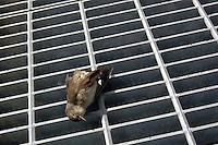 Uccello morto. Dead bird