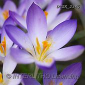 Gisela, FLOWERS, BLUMEN, FLORES, photos+++++,DTGK2345,#F#, EVERYDAY
