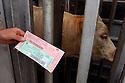 29/09/05 - BOURBON L ARCHAMBAULT - ALLIER - FRANCE - SICABA. Societe d Interet Collectif Agricole de Bourbon l Archambault. Abattage, decoupe, conditionnement et commercialisation de viande de bovin, d ovin et de porc. Passeport du bovin pour le controle de tracabilite - Photo Jerome CHABANNE