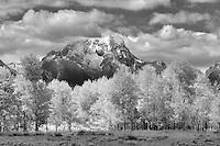 Mt. Moran and fall colored aspen trees. Grand Teton National Park, WY