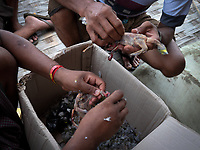 Street life in the town of Mrauk-U and surrounding areas, Rakhine State, Myanmar, Burma Plucking birds for dinner,