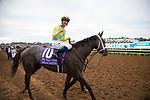 DEL MAR,CA-AUGUST 19: Dream Dancing,ridden by Julien Leparoux, wins the Del Mar Oaks at Del Mar Race Track on August 19,2017 in Del Mar,California (Photo by Kaz Ishida/Eclipse Sportswire/Getty Images)