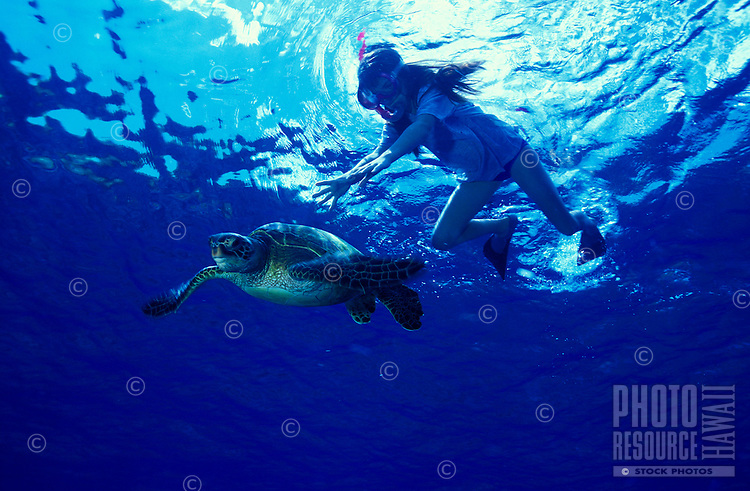 A young girl,age 9, snorkels with a Green Sea Turtle (Honu) at Hanauma Bay, Oahu. The honu is a threaten species and is protected under federal law. These turtles should not be touched or fed.