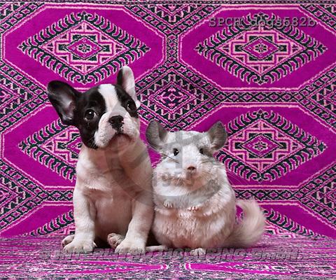 Xavier, ANIMALS, dogs, photos(SPCHdogs582b,#A#) Hunde, perros