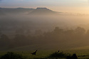 20/09/15<br /> <br /> A pheasant adds to an already stunning, picture-postcard, early autumn scene, as early morning mists cling to farmland  surrounding Dovedale and Thorpe Cloud in The Derbyshire Dales near in the Peak District.<br /> <br /> All Rights Reserved: F Stop Press Ltd. +44(0)1335 418365   www.fstoppress.com.