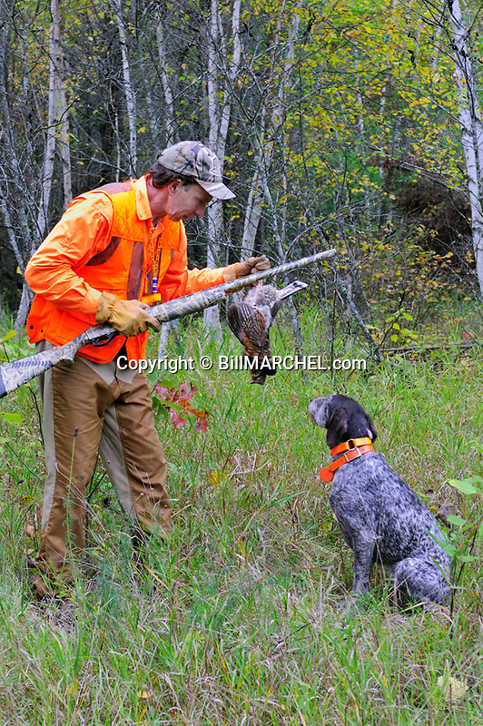 00515-072.15 Ruffed Grouse hunter takes grouse from dog (Deutsch Drahthaar) with ideal grouse habitat in background.