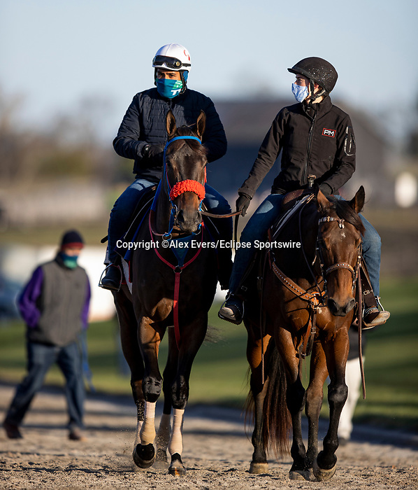 November 3, 2020: Come Dancing, trained by trainer Carlos Martin, exercises in preparation for the Breeders' Cup Filly & Mare Sprint at Keeneland Racetrack in Lexington, Kentucky on November 3, 2020. Alex Evers/Eclipse Sportswire/Breeders Cup