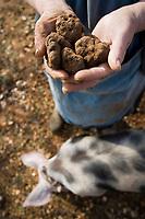 Europe/France/Midi-Pyrénées/46/Lot/Lalbenque: Marthe Delon lors du cavage (Recherche) de ses truffes sur le causse avec son cochon Kiki