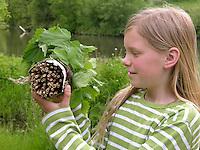 Kind, Kinder bauen Insekten-Hotel, Insektenhotel, Nisthilfe für Hymenopteren, hohle, gebündelte Pflanzenstängel bieten Nistmöglichkeiten für solitäre Wildbienen und Wespen