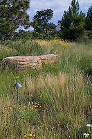 Seeded meadow lawn substitute in Colorado garden with boulder, stone accent