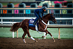 OCT 27: Breeders' Cup Juvenile entrant Scabbard, trained by Eddie Kenneally, gallops at Santa Anita Park in Arcadia, California on Oct 27, 2019. Evers/Eclipse Sportswire/Breeders' Cup