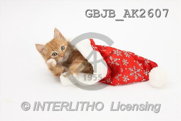 Kim, CHRISTMAS ANIMALS, photos(GBJBAK2607,#XA#) stickers