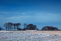Field and trees, Glanderston, Barrhead, East Renfrewshire