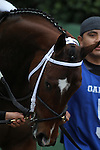 HOT SPRINGS, AR - MARCH 12: Terra Promessa (5) before the running of the Honeybee Stakes at Oaklawn Park on March 12, 2016 in Hot Springs, Arkansas. (Photo by Justin Manning)