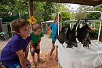 Tolga Bat Hospital volunteer kids play and feed the fruit bats.