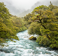 Hollyford River and native rainforest, Fiordland National Park, UNESCO World Heritage Area, Southland, New Zealand, NZ