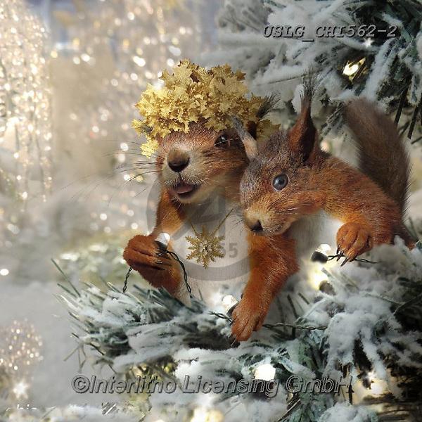 CHIARA,CHRISTMAS ANIMALS, WEIHNACHTEN TIERE, NAVIDAD ANIMALES, paintings+++++,USLGCHI562-2,#XA# ,funny ,funny