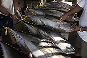 Workers check the freshness of the sustainably caught tuna at a buying unit in Puerto Princesa, Palawan in the Philippines. <br /> Photo: Sanjit Das/Panos for Greenpeace