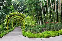 Singapore Botanic Garden, Golden Shower Arches in National Orchid Garden.