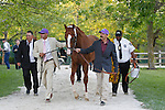 May 17, 2014. California Chrome returns to the stakes barn after winning the 139th Preakness Stakes at Pimlico Race Course in Baltimore, MD. ©Joan Fairman Kanes/ESW/CSM