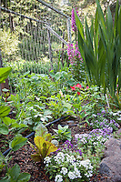 Organic mixed vegetable garden with lettuce, flowers, beans and drip irrigation; MUST CREDIT: Elvin Bishop Garden