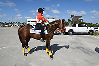 Canter for the Cause 2021