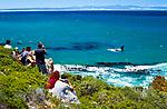Suedafrika, Suedliches Kap, Hermanus: Wale beobachten - Touristenattraktion September bis Oktober in der Walker Bay | South Africa, Southern Cape, Hermanus: Whale watching, September-October at Walker Bay