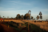 Runner training in Iten, Kenya