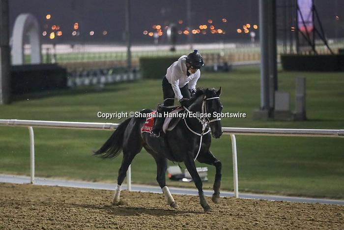 March 25, 2021: Dubai World Cup contender Chuwa Wizard (JPN) trains on the track for trainer Ryuji Okubo at Meydan Racecourse, Dubai, UAE.<br /> Shamela Hanley/Eclipse Sportswire/CSM