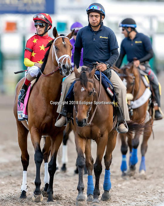 HALLANDALE BEACH, FL - MAR 31:Audible #8 trained by Todd A. Pletcher and ridden by John Velazquez is led onto the track prior to running and winning the Xpressbet Florida Derby (G1) at Gulfstream Park on March 31, 2018 in Hallandale Beach, Florida. (Photo by Bob Aaron/Eclipse Sportswire/Getty Images)