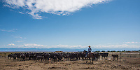 Cowboy and Cowgirl roping,riding and branding in Wyoming. Cowboy and Cowgirl photographs of western ranches working with horses and cattle by western cowboy photographer Jess Lee. Photographing ranches big and small in Wyoming,Montana,Idaho,Oregon,Colorado,Nevada,Arizona,Utah,New Mexico. Fine Art Limited Edition Photography Of American Cowboys and Cowgirls by Jess Lee