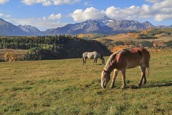 Horses grazing in the Rocky Mountains, Colorado. John guides custom photo tours in the Sneffels Range and throughout Colorado. .  John leads private photo tours in Telluride and the San Juan Mountains. Year-round Colorado photo tours.