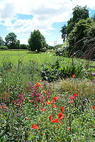 Cottage style garden with blue sky, poppies, allium, Nigella, flowers and ornamental grasses, overlooking field with trees