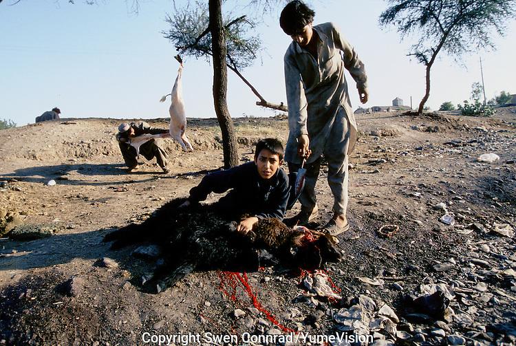 Street Afghan butcher next to a Afghan refugee camp in Peshawar, Pakistan
