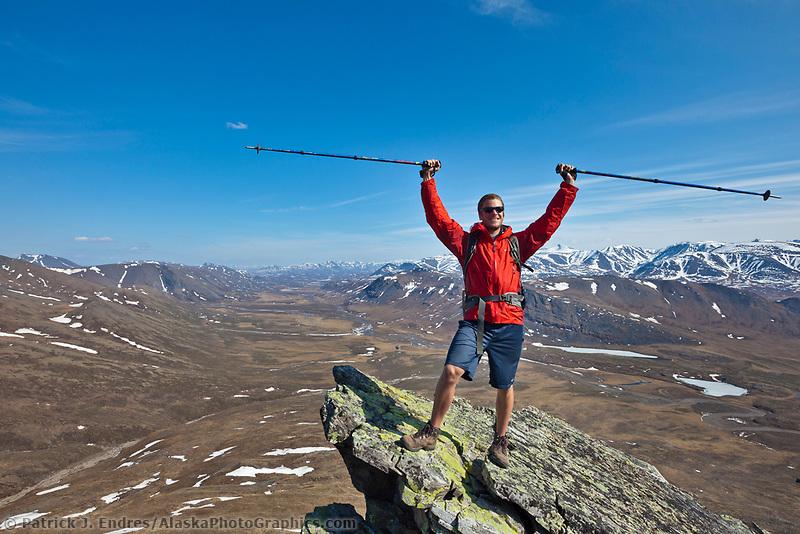 Angus rose on a mountain ridge of the Brooks Range, Gates of the Arctic National Park, Alaska.