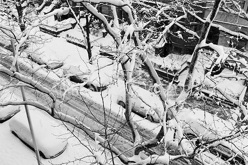 Brooklyn, New York<br /> Park Slope<br /> February 9, 2013<br /> <br /> A major snow storm hits the east coast.