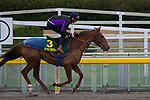 FUCHU,JAPAN-NOVEMBER 23: Nightflower,trained by Peter Schiergen,exercises in preparation for the Japan Cup at Tokyo Racecourse on November 23,2016 in Fuchu,Tokyo,Japan (Photo by Kaz Ishida/Eclipse Sportswire/Getty Images)