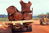 Amazon, Brazil. Mahogany logs on a lorry for export from the rainforest.