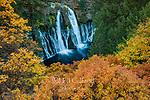 Waterfalls, California black Oak, Burney Falls Memorial State Park, Shasta-Trinity National Forest, Shasta County, California