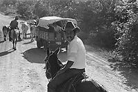 - Nicaragua, transport of cattle on the road from Managua to Rama<br /> <br /> - Nicaragua, trasporto di bestiame sulla strada da Managua a Rama