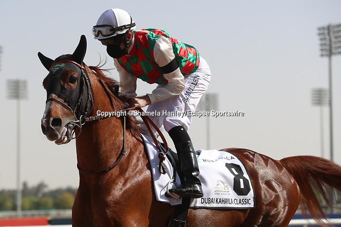 March 27, 2021: HAYYAN (FR) #8, in the post parade for the Kahayla Classic on Dubai World Cup Day, Meydan Racecourse, Dubai, UAE. Shamela Hanley/Eclipse Sportswire/CSM